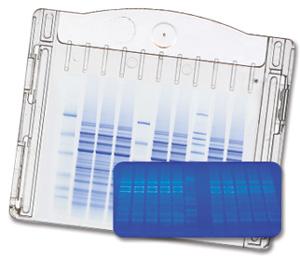 Precast protein gels : $5.94 / gel