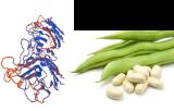 Phaseolus limensis Lectin (LBA)