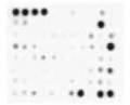 Membrane-Based Antibody Arrays
