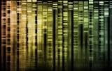 Nucleic acids electrophoresis