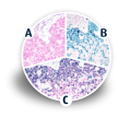 Polymer HRP and AP Double and Triple Staining Kits